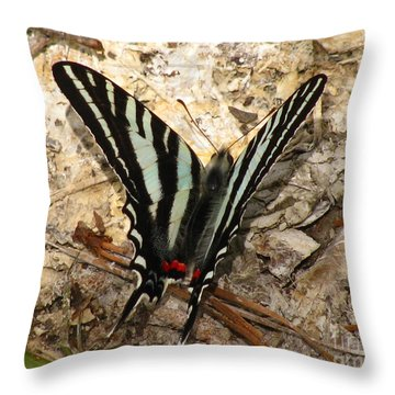 Throw Pillow featuring the photograph Zebra Swallowtail by Donna Brown