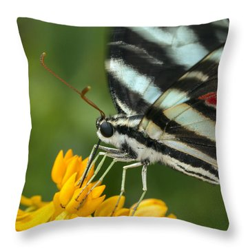 Zebra Swallowtail Drinking On The Fly Throw Pillow