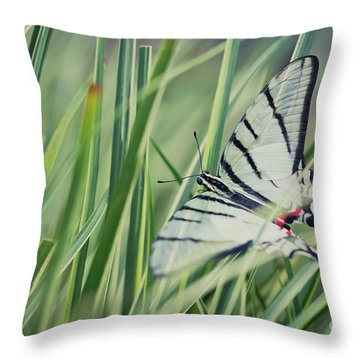 Zebra Swallowtail Throw Pillow