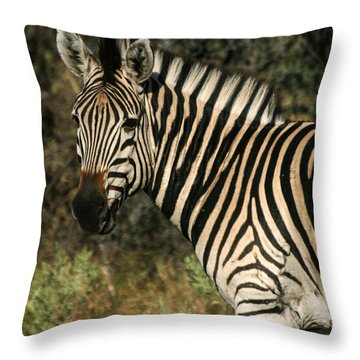 Throw Pillow featuring the photograph Zebra Watching Sq by Karen Zuk Rosenblatt