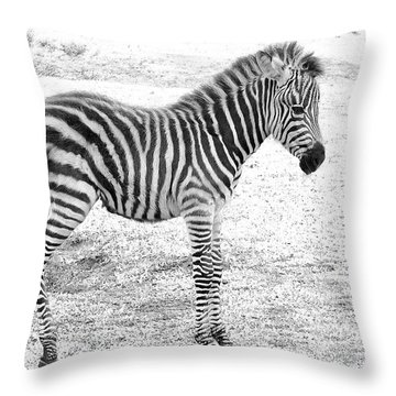 Throw Pillow featuring the photograph Zebra White And Black Photography by David Mckinney
