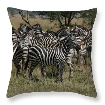 Zebra Zebra Zebra Throw Pillow