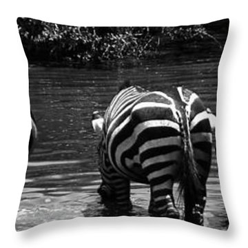 Zebras Cautiously Drinking Throw Pillow by Darcy Michaelchuk