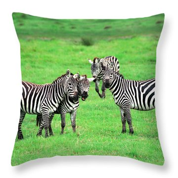 Zebras Throw Pillow by Sebastian Musial