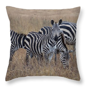 Zebras Walking In The Grass 2 Throw Pillow