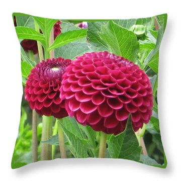 Zinnia Duet Throw Pillow