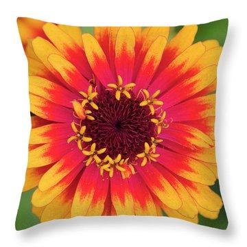 Zinnia Elegans Zowie Yellow Flame Flower  Throw Pillow