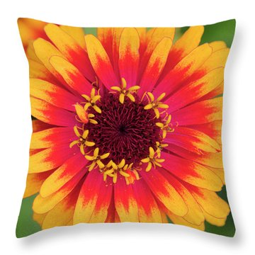 Throw Pillow featuring the photograph Zinnia Elegans Zowie Yellow Flame Flower  by Tim Gainey