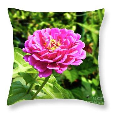 Zinnia Flower Pink Tones Throw Pillow