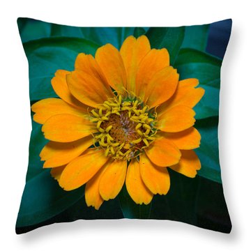 Zinnia Hybrida Throw Pillow