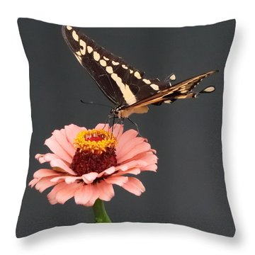Zinnia With Butterfly 2702 Throw Pillow