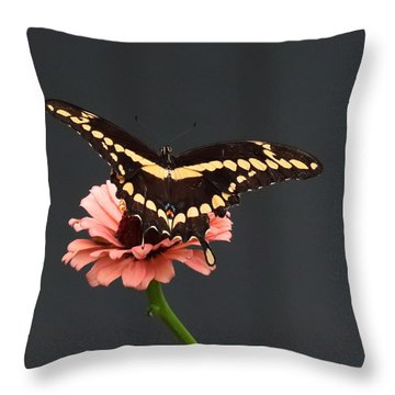 Zinnia With Butterfly 2708  Throw Pillow