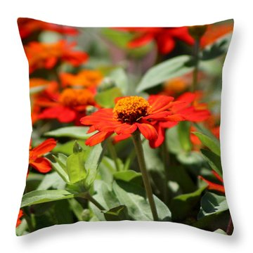 Zinnias In Autumn Colors Throw Pillow
