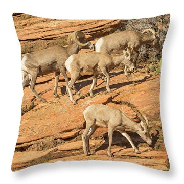 Zion Big Horn Sheep Throw Pillow