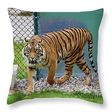 Throw Pillow featuring the photograph Zoo Tiger Staring At Me by Merton Allen