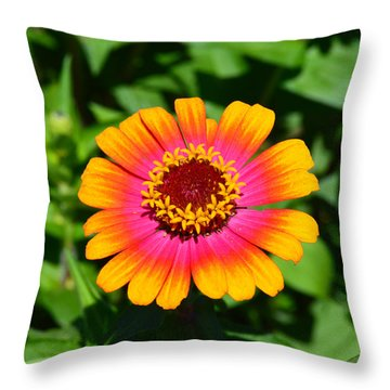 Flame On Throw Pillow by Kathy Kelly