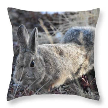 Throw Pillow featuring the photograph 02-27-18 Rabbit by Margarethe Binkley