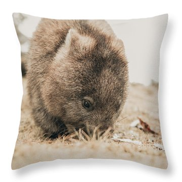 Throw Pillow featuring the photograph Adorable Large Wombat During The Day Looking For Grass To Eat by Rob D Imagery
