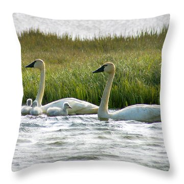 Arctic Tundra Swans And Cygnets Throw Pillow