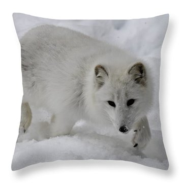 Artic Fox Throw Pillow