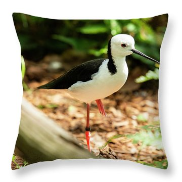 Throw Pillow featuring the photograph Black-winged Stilt by Rob D Imagery