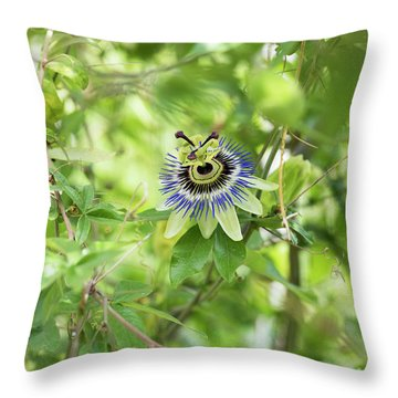Throw Pillow featuring the photograph Blue Passion Flower In An English Garden by Tim Gainey
