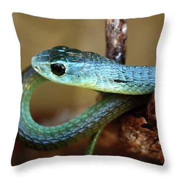 Boomslang Throw Pillow