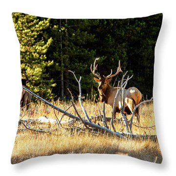 Throw Pillow featuring the photograph Bull Elk  by Pete Federico