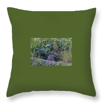 Throw Pillow featuring the photograph Burrowing Owl by Paul Schultz