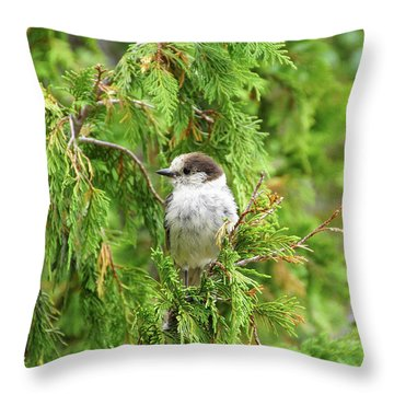 Camprobber - The Gray Jay Throw Pillow
