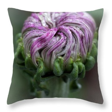 Throw Pillow featuring the photograph Chrysanthemum 'lili Gallon' by Ann Jacobson