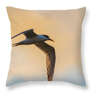 Crested Tern In The Early Morning Light Throw Pillow
