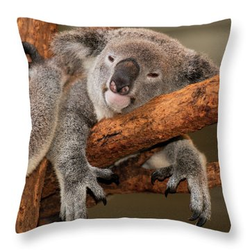 Cute Australian Koala Resting During The Day. Throw Pillow