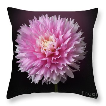 Throw Pillow featuring the photograph Dahlia 'chilson's Pride' by Ann Jacobson