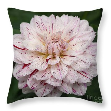 Throw Pillow featuring the photograph Dahlia 'picasso' by Ann Jacobson