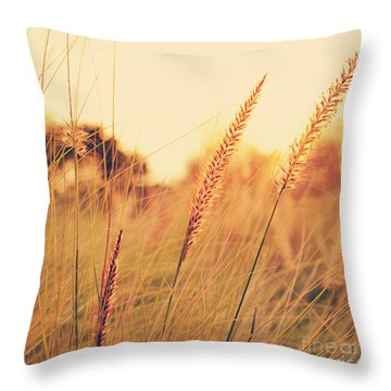 Throw Pillow featuring the photograph Glowing Fountain Grass - Hipster Photo Square by Charmian Vistaunet