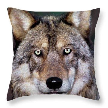 Gray Wolf Portrait Endangered Species Wildlife Rescue Throw Pillow