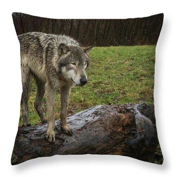 Hangin On The Log Throw Pillow