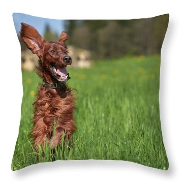 Happy Setter Throw Pillow