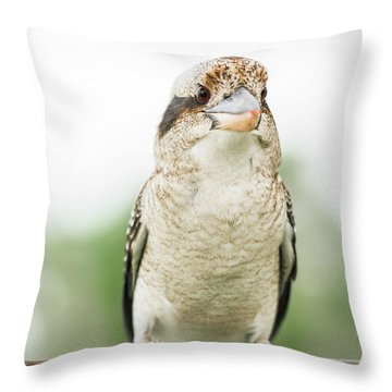 Throw Pillow featuring the photograph Kookaburra Gracefully Resting During The Day. by Rob D Imagery