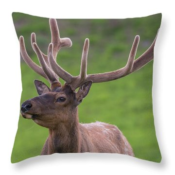 Throw Pillow featuring the photograph ME1 by Joshua Able's Wildlife