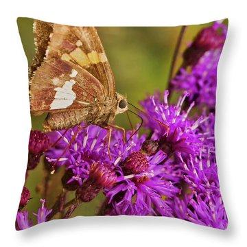 Moth On Purple Flowers Throw Pillow
