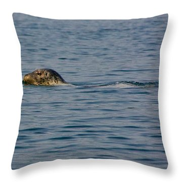 Pacific Harbor Seal Throw Pillow