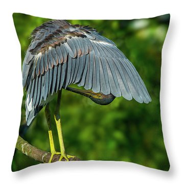 Preening Reddish Heron Throw Pillow
