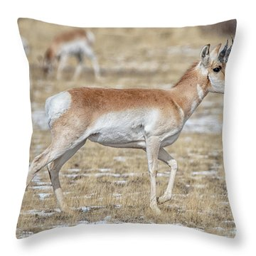 Throw Pillow featuring the photograph Pronghorn by Bitter Buffalo Photography