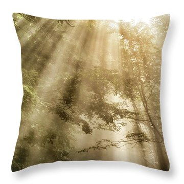Rays Of Light In Forest Throw Pillow