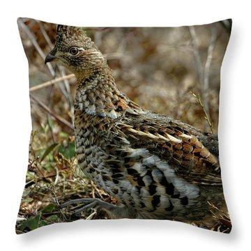 Ruffed Grouse 50702 Throw Pillow