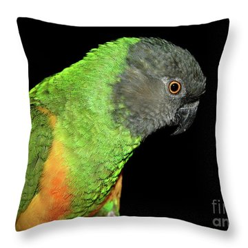 Throw Pillow featuring the photograph Senegal Parrot by Debbie Stahre