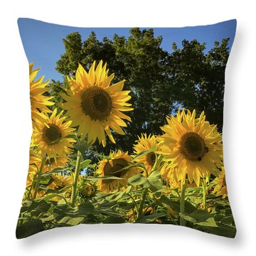 Sunlit Sunflowers Throw Pillow