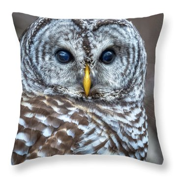 Barred Owl Throw Pillow